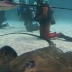 Baltimore Dive-01