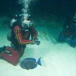 Baltimore Dive-21
